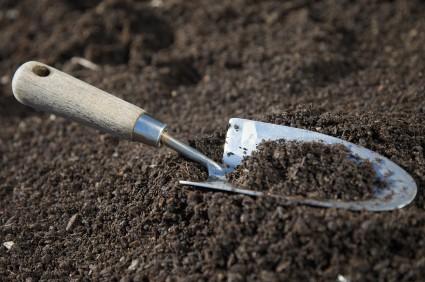 garden soil - Garden Dirt