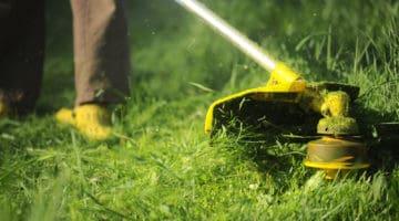The Hidden Relaxation Benefits of Keeping a Garden