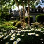 Basic Landscaping: What You Should Know as a Beginner